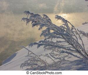 Frozen branch. - Frozen burdock plant.