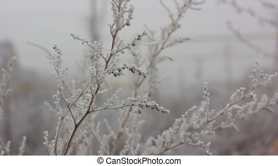 Frozen branch in winter