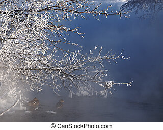 Frozen branch over river.