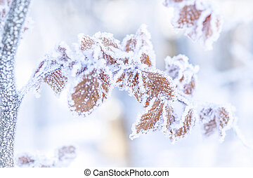 Frozen Branch with Brown Leaves