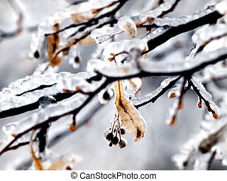 branches covered by ice. close up shot