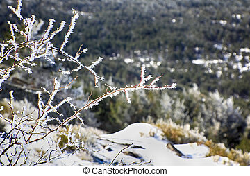 frozen branches on the mountain