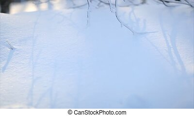 Frozen branches, panning up