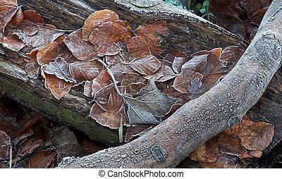Frozen braun winter leaves