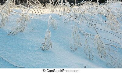 Frozen bushes in severe winter morning