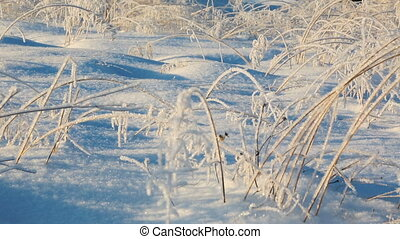 Frozen bushes in severe winter morning