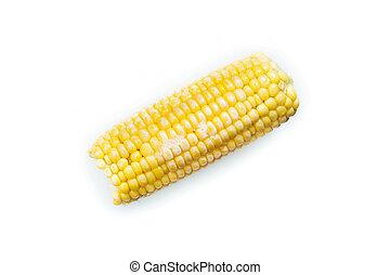 Frozen cob of corn. Isolated