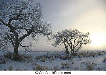 Frozen Cottonwoods