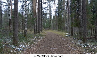 Frozen dirty pathway in the pine forest - Shooting of frozen...