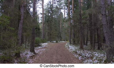 Frozen dirty road in the pine forest