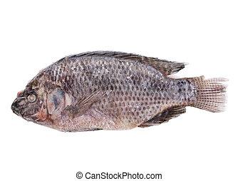 Frozen Fish