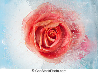 frozen flora - orage rose in  block of ice