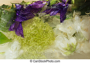 Frozen flower of jessamine and hydrangea, campanula - Frozen...