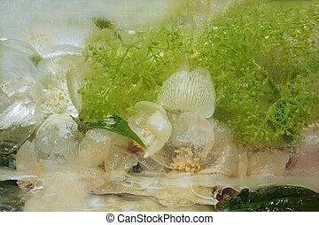 Frozen fresh beautiful flower of jessamine, hydrangea and air bubbles in the ice cube