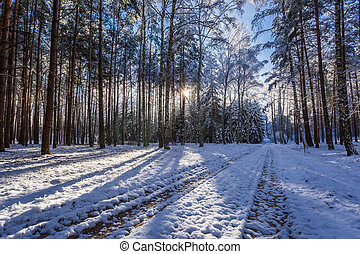 Frozen forest at sunset in winter