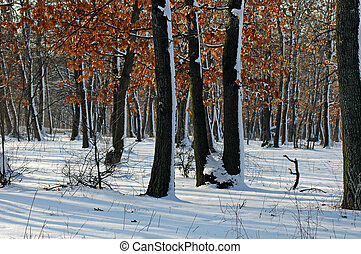 Frozen forest in the winter