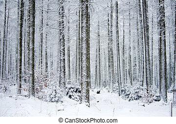 frozen forest in winter (ardennes belgium)
