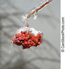 Frozen fruits red rowan ice closeup