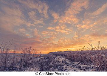 Frozen grass at the sea shore