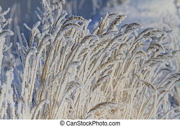 frozen grass illuminated winter sun