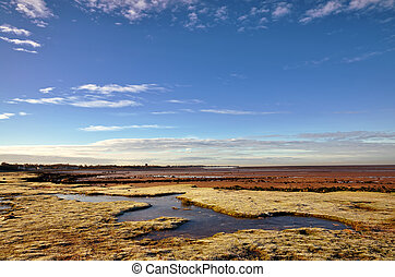 Frozen grass on Morecambe Bay in Winter.