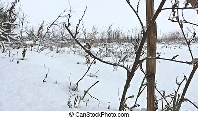 frozen grass snows beautiful field winter nature - frozen...