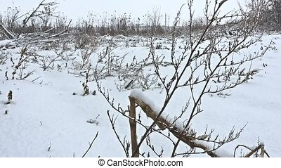 frozen grass snows winter beautiful field nature - frozen...