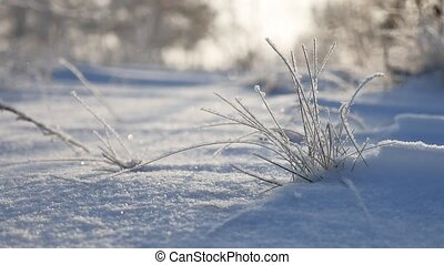 frozen grass sways in the wind in the winter snow falls nature sunlight beautiful sun glare