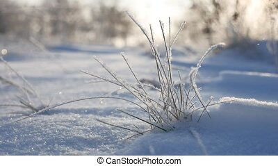 frozen grass sways in the wind in the winter snow falls nature beautiful sunlight sun glare