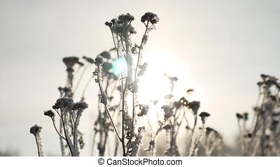 frozen grass sways sunlight in the wind in the winter snow falls nature beautiful sun glare