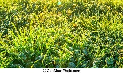 Frozen grass, timelapse