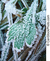 Frozen green leaf coverd of ice