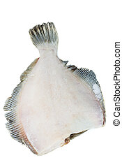 Frozen headless flatfish isolated on white background. Focus...