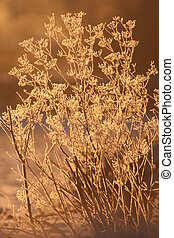 Hogweed - Frozen Hogweed