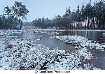 frozen lake in winter forest