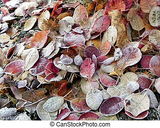 Frozen leaf ground