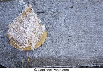 Frozen Leaf of birch