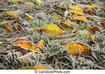 Frozen leaves in autumn colors in the early winter