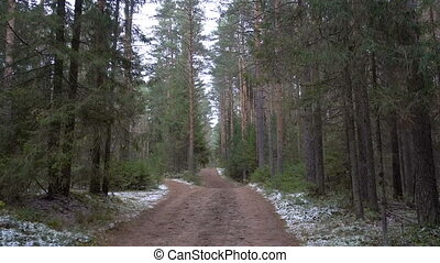 Frozen muddy road in the pine forest