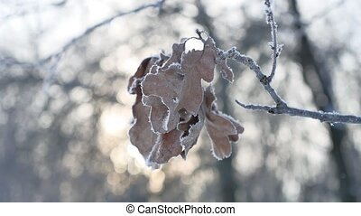frozen oak branch in the woods in the snow nature landscape...