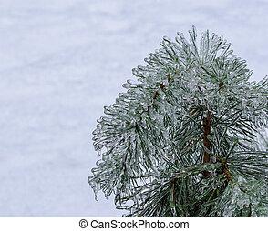Frozen pine needles on white.