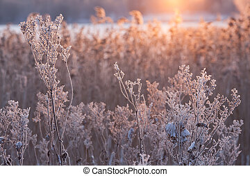 Frozen plant in sunlight at winter