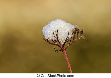frozen plant with snow