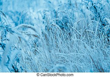 frozen plants in hoarfrost in winter afternoon