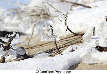 Frozen plants in winter