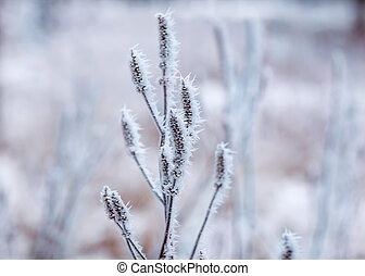 Frozen plants, winter background