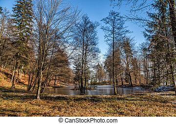 Frozen pond in austria