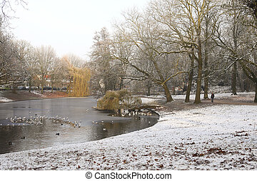 Frozen pond in park with birds