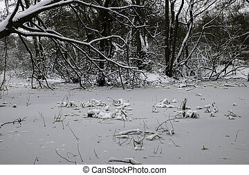 frozen pond in winter in the forest in holland