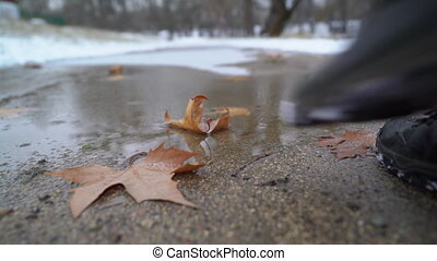 Frozen puddle covered with ice and fallen leaves. Man...